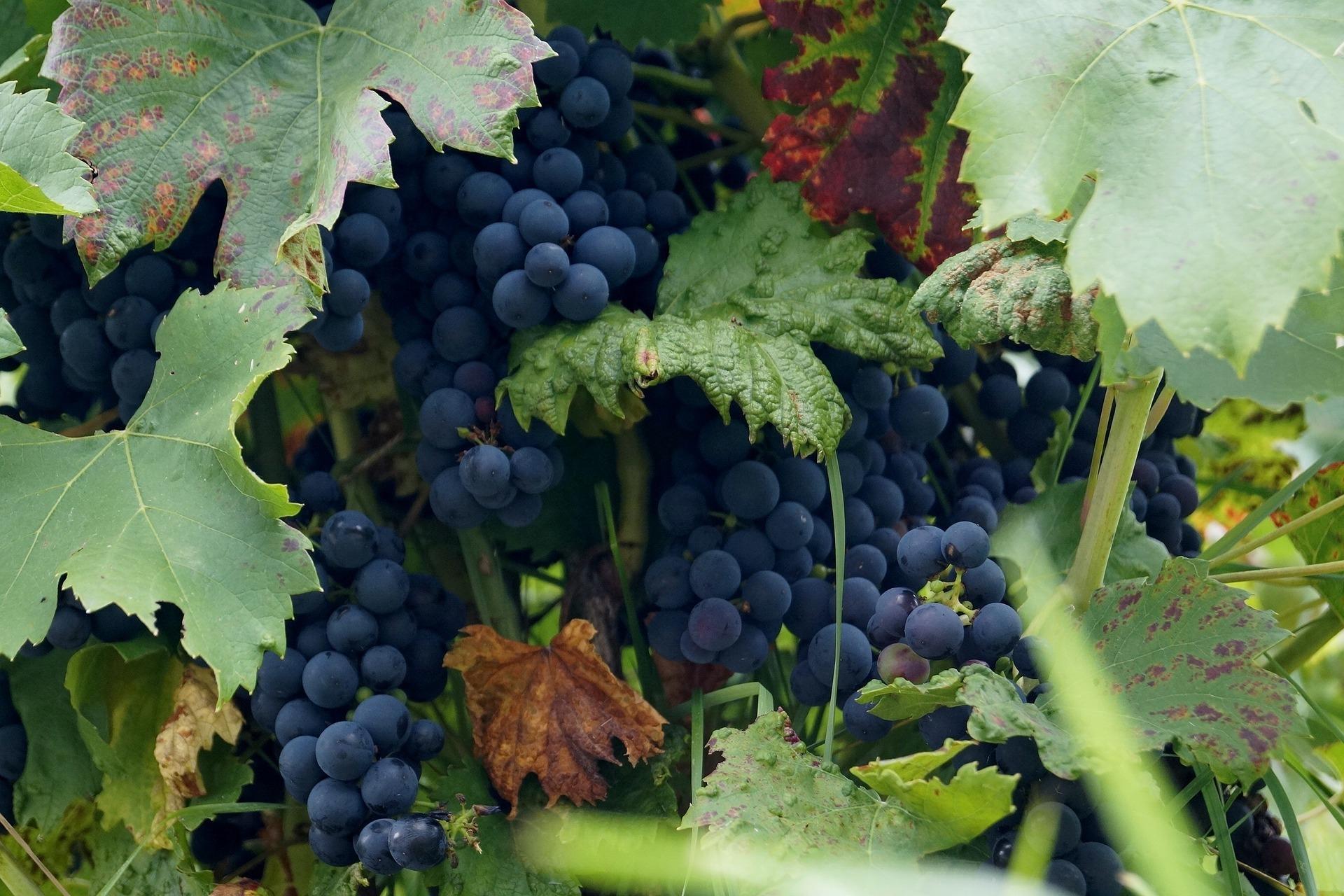 Wine-641113_1920