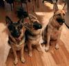 Raffle_dogs_thumb