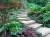 Stepsfirstpage_thumb