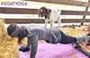Goat_yoga2_thumb